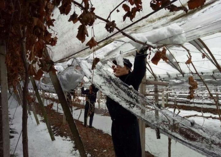 湖州道场乡20亩葡萄棚遭雪重创 民警帮助村民清除积雪