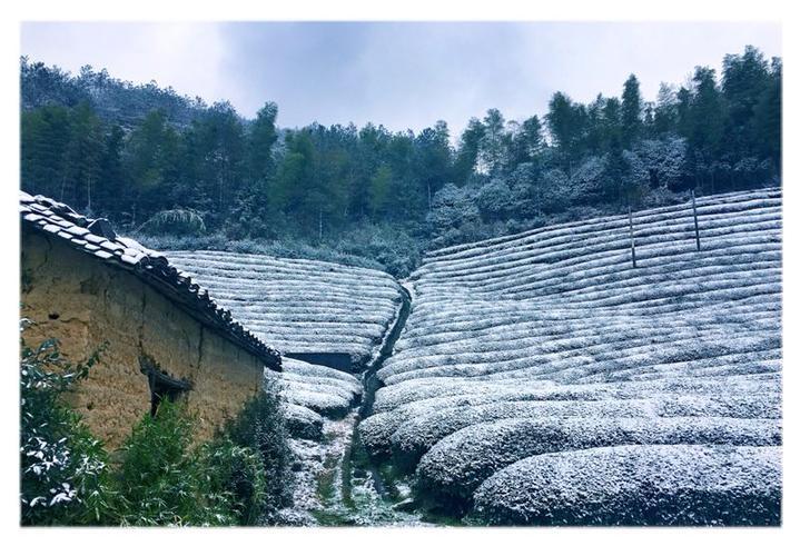 《茶园雪韵》人到中年摄于沙畈乡