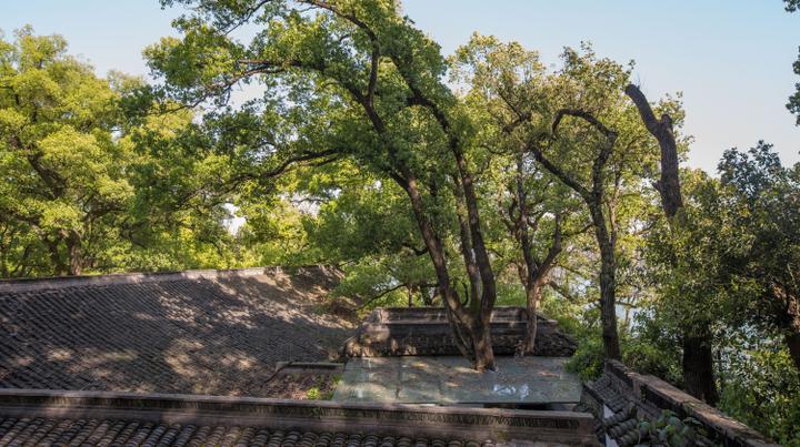 """美成一道风景 杭州""""最环保""""公厕里穿出百年大树"""
