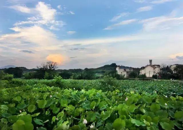 浙江衢州农村风景