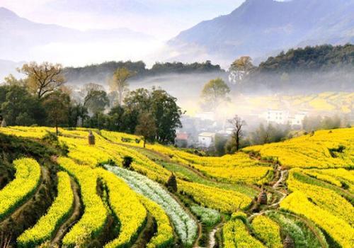 景观手绘 农田景观