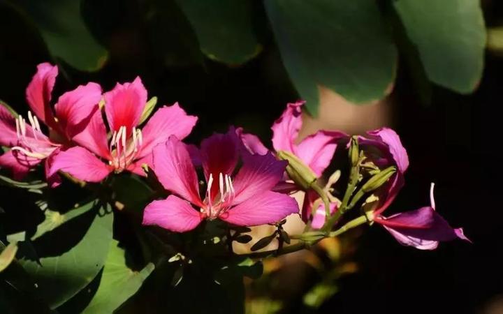 五朵花瓣圆画法步骤
