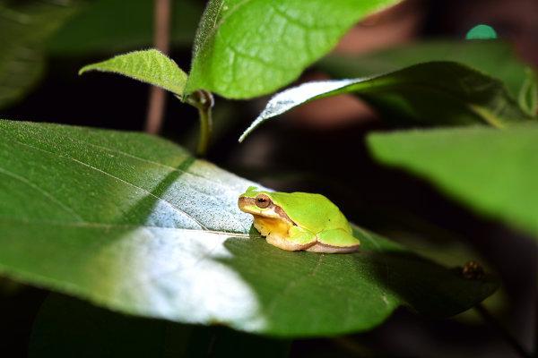 西湖播报丨夜观植物园 走进小动物的世界