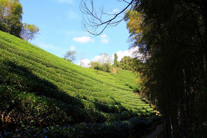 茶山风景 禅意矢量图