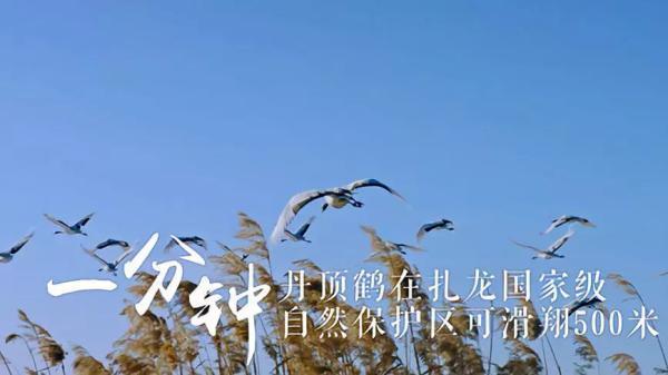 """7平方米 一分钟,丹顶鹤在自然保护区滑翔500米 一分钟,""""极地特快""""哈"""