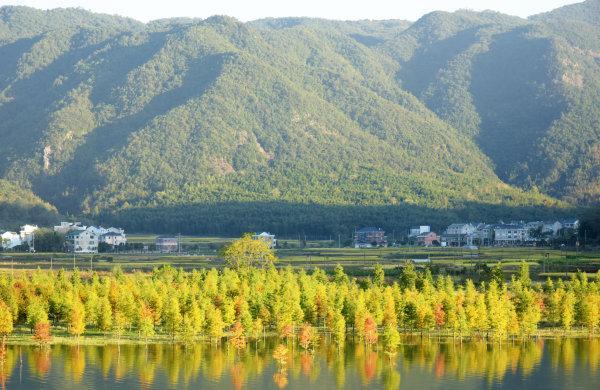 台州市黄岩区平田乡桐外岙村长潭湖畔,一片红树林带给了人们不一样