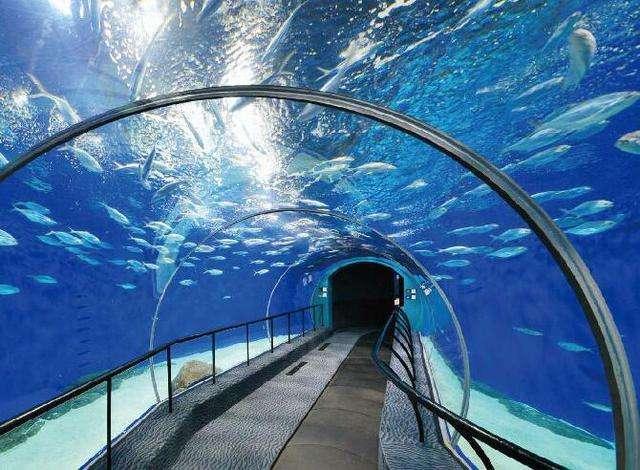 瓯海旅游规划出炉 野生动物园和极地海洋公园不远了