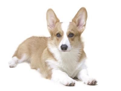 """""""狗本身是一个可爱的动物,它自身没有善恶美丑,没有是非分辨能力,它不"""