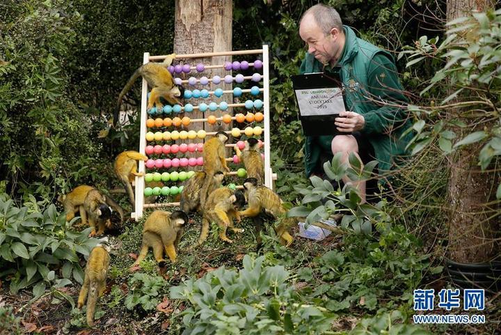 伦敦动物园进行动物年度盘点-温州日报瓯网 - 温州网