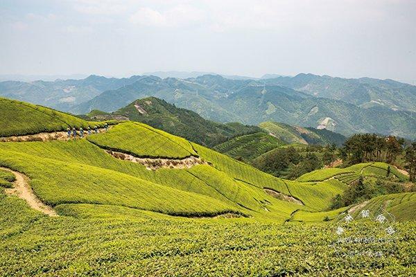 鄭州茶城網