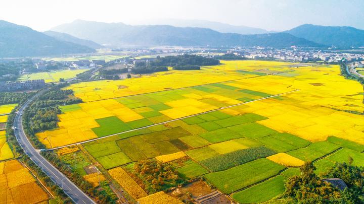 232省道旁的水稻田熟了 (2018.10.15 雷步涨 摄).jpg
