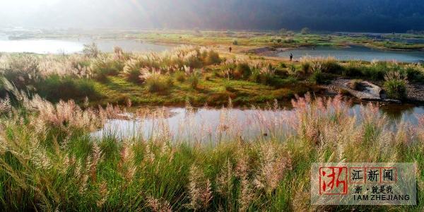湿地公园秋景美4.jpg