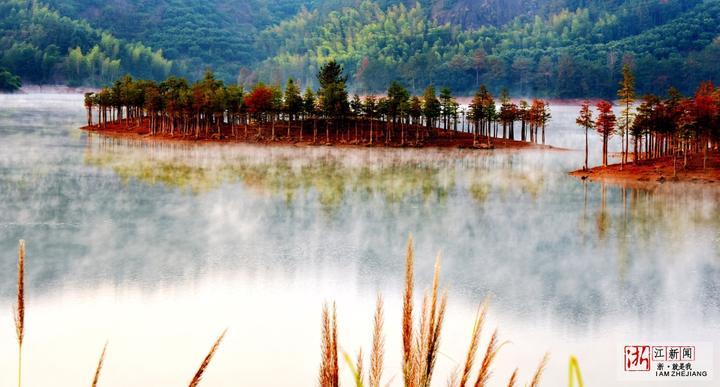 红水杉11.jpg