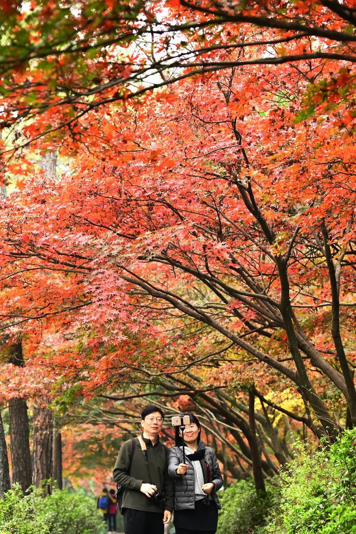 枫红灵隐路(里尔摄影)4.jpg