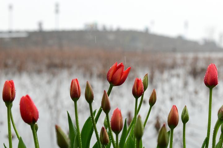 杭城将在雨中跨年(里尔摄影)2.jpg