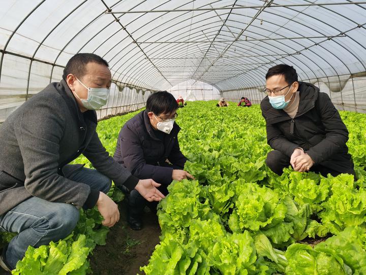 省农业农村厅种植业专家到舒兰农业现场指导蔬菜生产,确保市场供应。 叶敏摄 (1).jpg