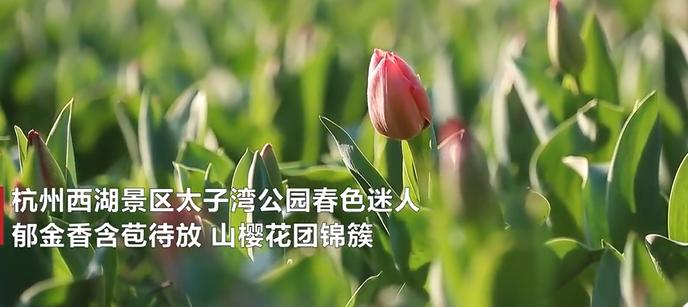QQ图片20200217211317.png