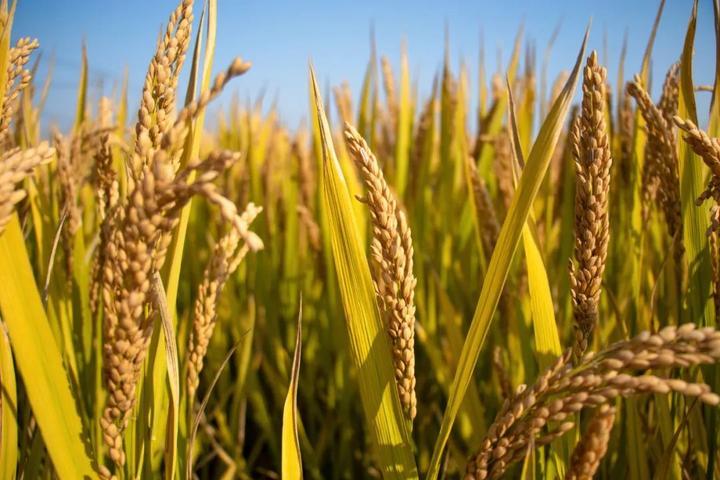 China able to ensure food security despite coronavirus impact