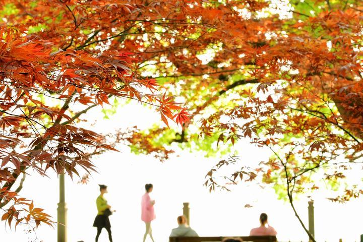 """杭城""""枫""""景又起(里尔摄影)1.jpg"""