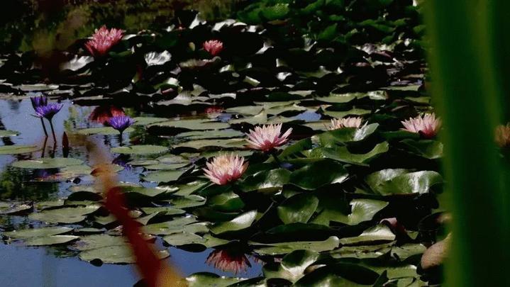 """你好呀这是初夏西湖的""""花花世界"""""""