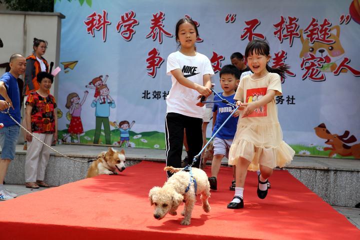 宠物T台走秀  倡导文明养犬1-1.JPG