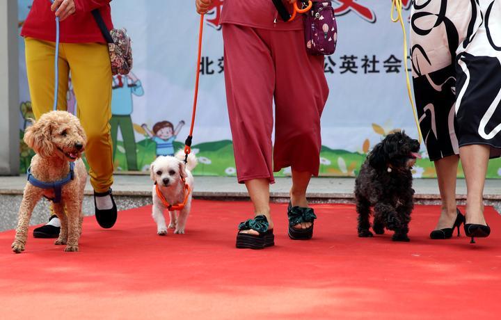 宠物T台走秀  倡导文明养犬1-3.JPG