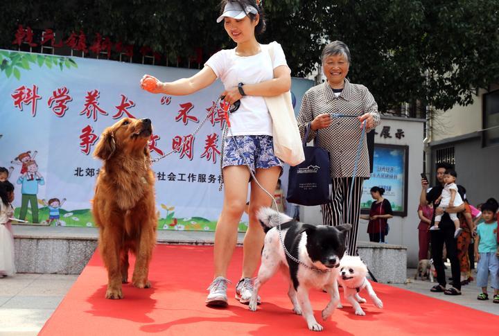宠物T台走秀  倡导文明养犬1-8.JPG