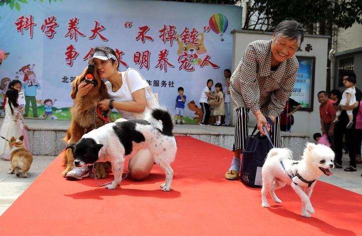宠物T台走秀  倡导文明养犬1-9.JPG