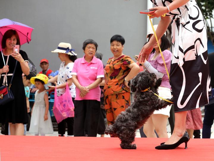 宠物T台走秀  倡导文明养犬1-10.JPG