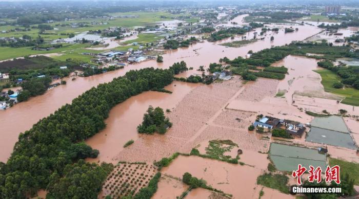 四川眉山被淹的农田。中新网 图