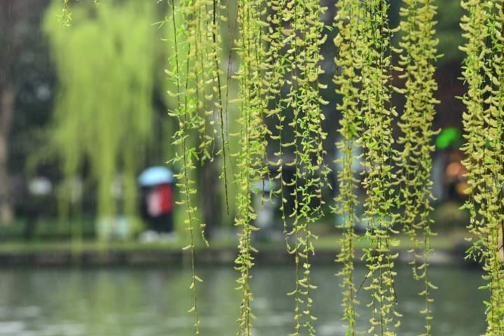 春雨潇潇西湖情(里尔摄影)4.jpg