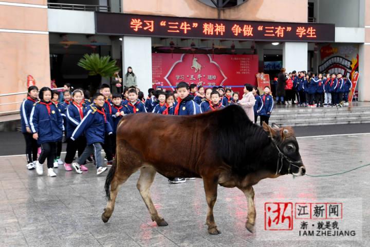 2月27日,绍兴市上虞区城东小学的学生现场和老黄牛合影。 .jpg