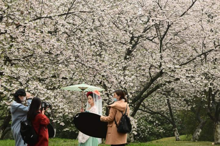西湖樱花之约(里尔摄影)4.jpg