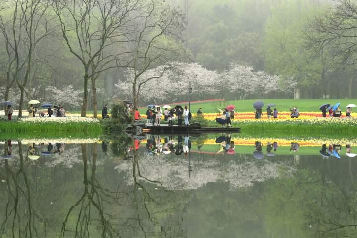 西湖樱花之约(里尔摄影)5.jpg