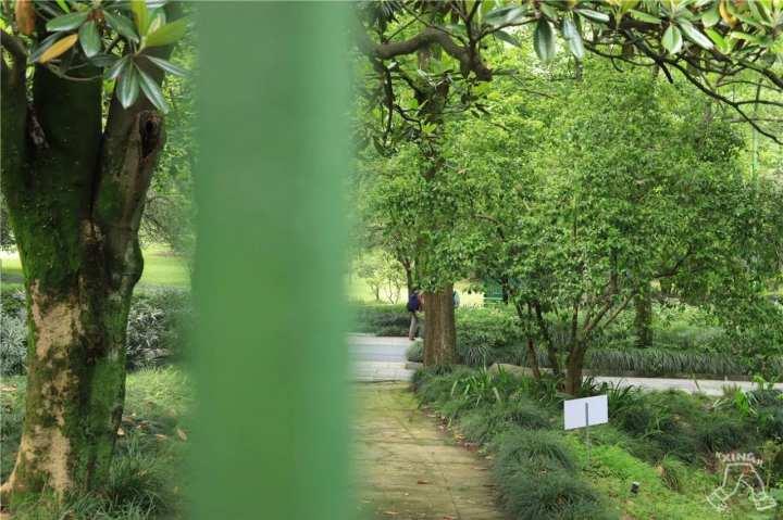 木兰茶园2.jpg