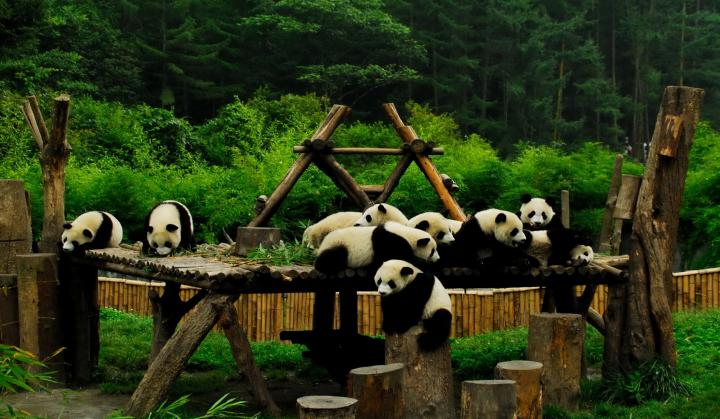 大熊貓.png